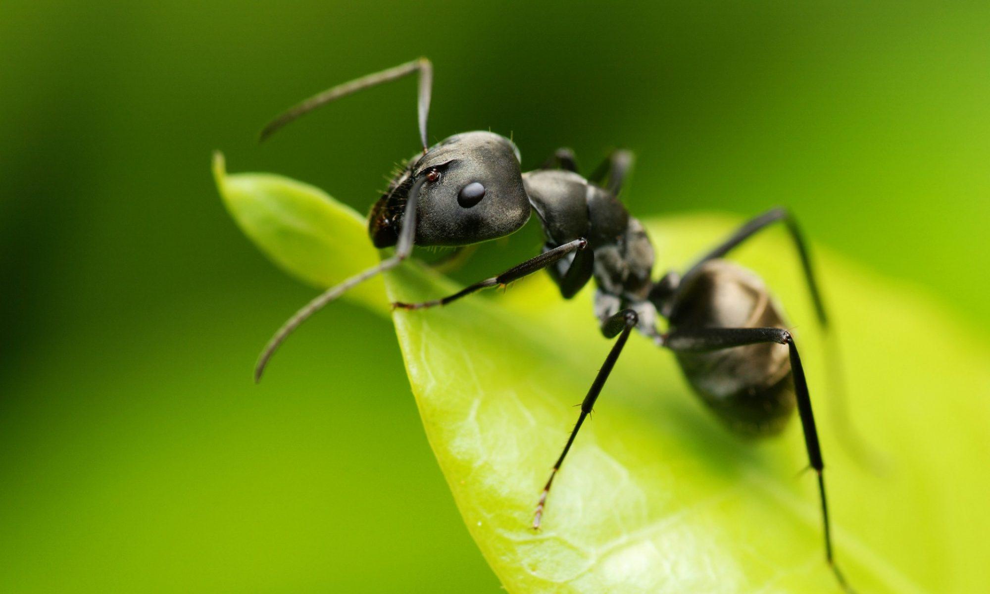 Formicarium - Boutique fourmis et vivarium fourmis